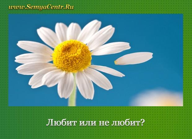 На фоне неба цветок ромашки с оторванным лепестком